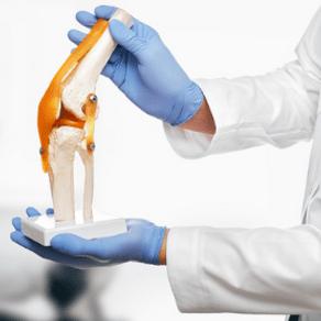 miniatura_anatomia_aplicada_a_fisioterapia_05072021